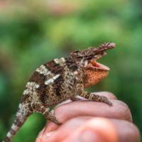 chameleon-along-the-way